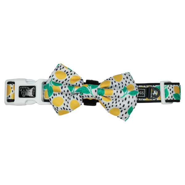 Dog Comfort Collar and Bow Tie Main Squeeze Lemons