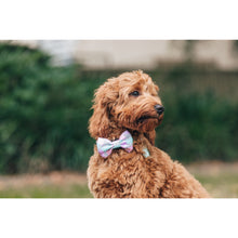 Dog Collar and Bow Tie Pastel Dreams