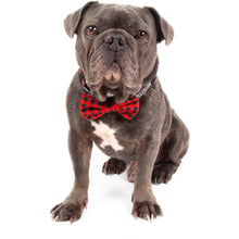 Dog Collar and Bow Tie Plaid to the Bone Red and Black Plaid