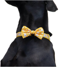 Dog Collar and Bow Tie Show Me The Bunny Easter