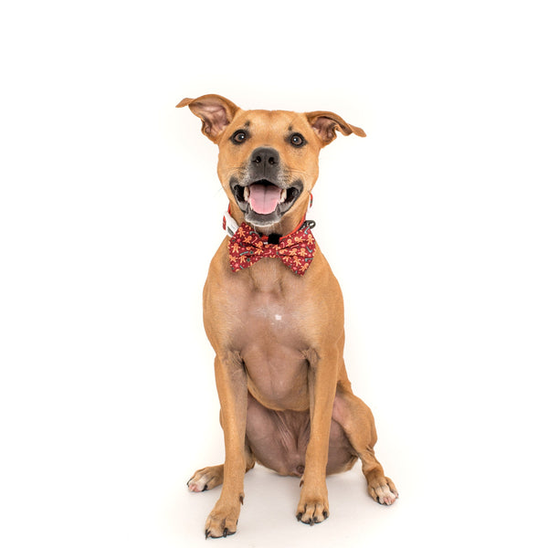 The Gingerbread Man Christmas Dog Comfort Collar with detatchable Bow Tie