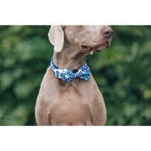Dog Collar and Bow Tie Trevi Terrazzo