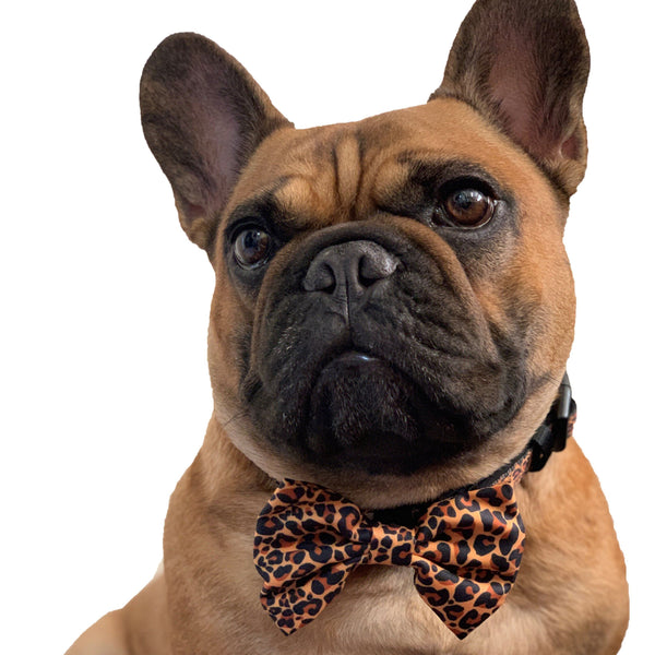 DOG COLLAR & BOW TIE: Wild at Heart