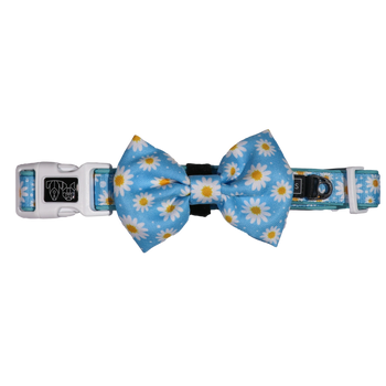 DOG COLLAR & BOW TIE: Lazy Daisy (NEW!)