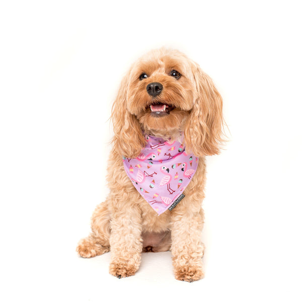 Neckerchief Bandana for Big and Small Dogs For Flocks Sake Flamingos