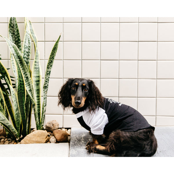 Dog Raglan Tee Black with White Sleeves BLD Logo