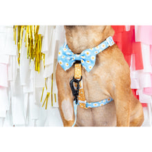 Dog Strap Harness Lazy Daisy