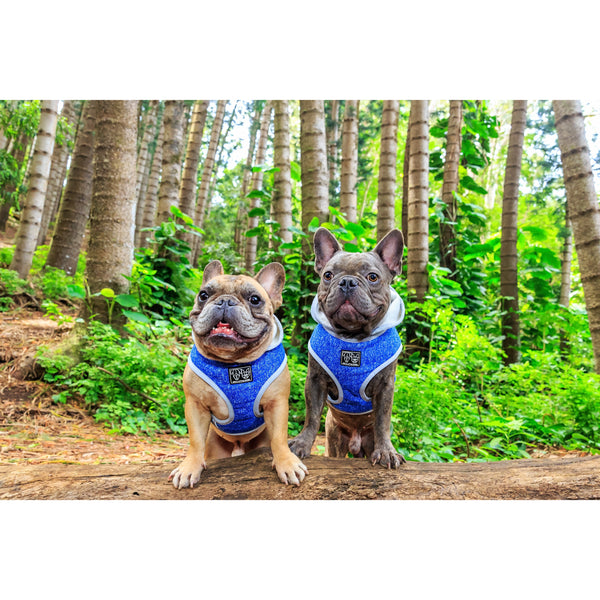 Hoody Dog Harness Classic Blue with Hood