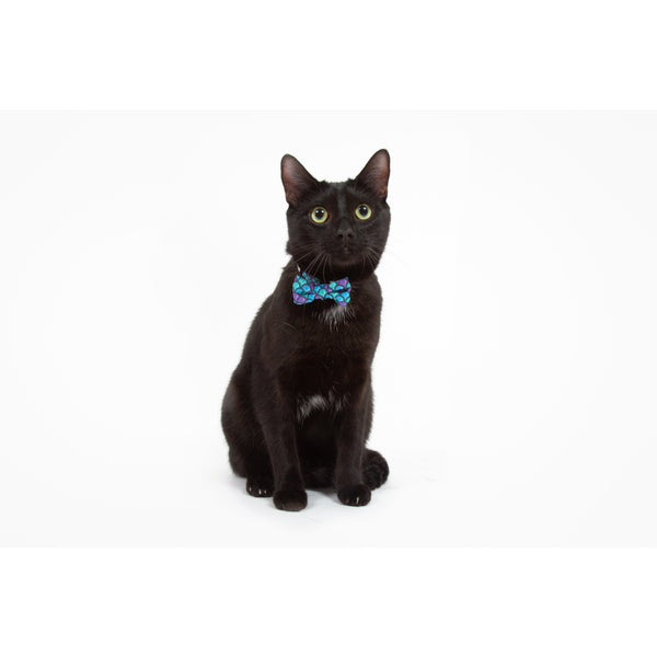 CAT COLLAR & BOW TIE: Scaled Back