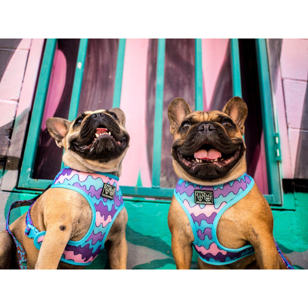 Melting Moments Reversible Dog Harness