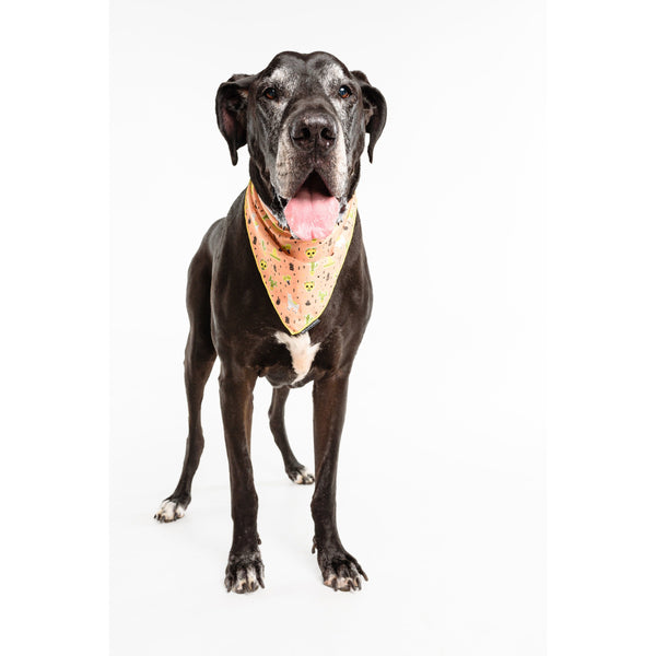 Neckerchief Bandana for Big and Small Dogs MexiCali Mexican Llamas