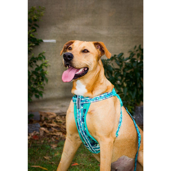 Chest Plate Harness for Big and Small Dogs Miami Palms