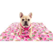 On The Go Pet Mat Plant One on Me Cactus Succulent Plants Pink Dots