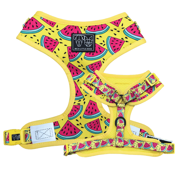 One in a Melon Watermelon Adjustable Dog Harness