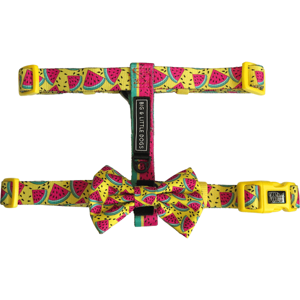 One in a Melon Watermelon Dog Strap Harness