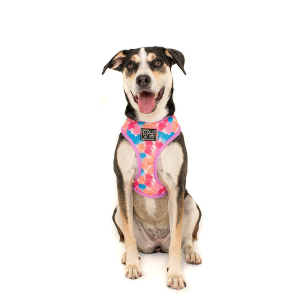 One of a Kind Unicorns and Rainbows Reversible Dog Harness