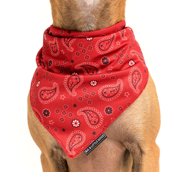 Paisley Dog Cooling Neckerchief Bandana