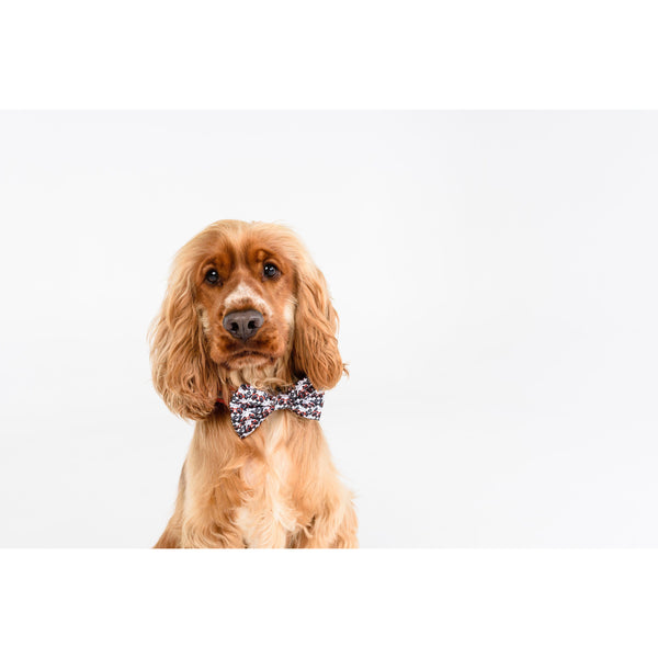 Dog Collar and Bowtie for Big and Small Dogs Panda Panda