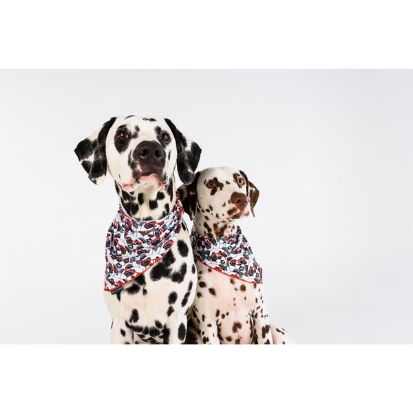 Neckerchief Bandana for Big and Small Dogs Panda Panda