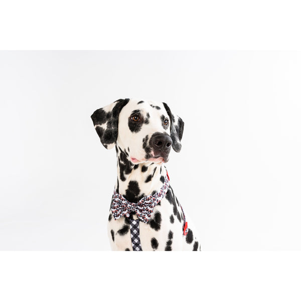 Dog Strap Harness with Bow Tie for Big and Small Dogs Panda Panda