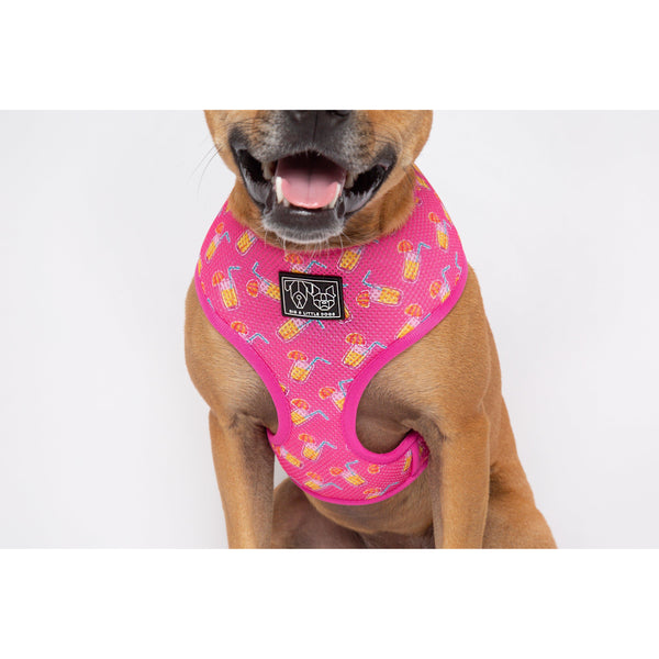 Pawty Punch Cocktail Classic Mesh Dog Harness