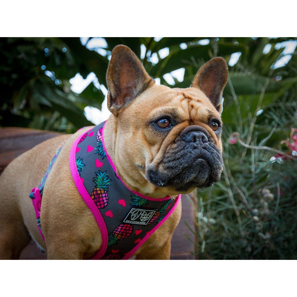 Pineapple and Pink Aztec Reversible Dog Harness Front View