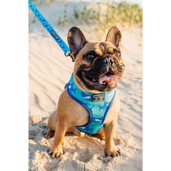 Predator Shark Reversible Dog Harness and Dog Leash