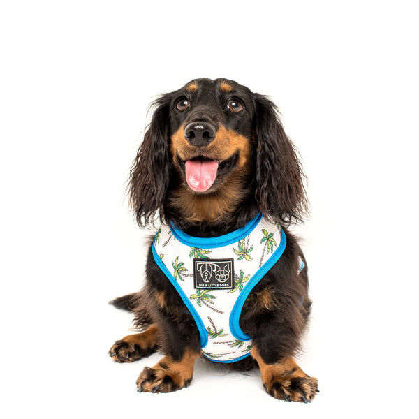 Great White Shark Palm Reversible Dog Harness