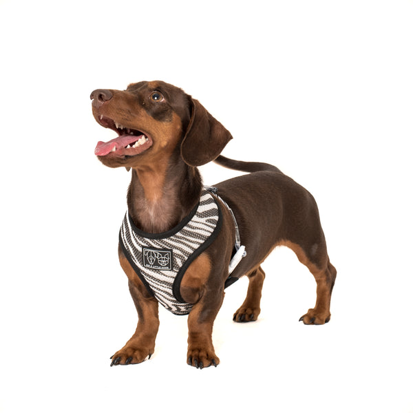 Reversible Dog Harness Neoprene and Mesh Into The Wild Zebra Jungle Zebra Pattern