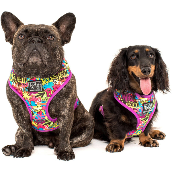 King of Graffiti Crowns Reversible Dog Harness