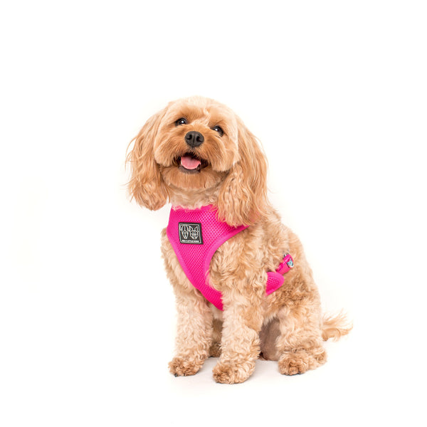 That Floral Feeling Flower Reversible Dog Harness