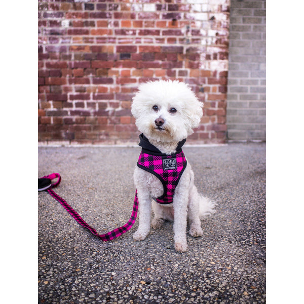 DOG HOODY HARNESS: The Jill