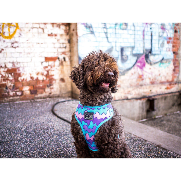 Pupflix and Chill and Melting Moments Reversible Dog Harness Reverse View