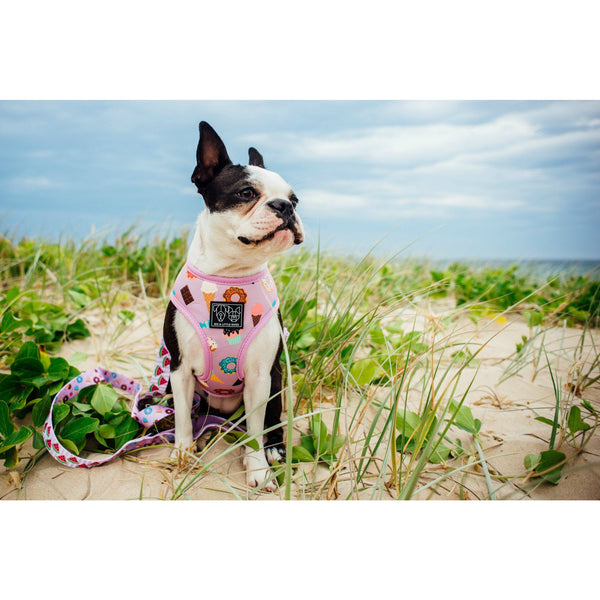 Sugar Coma Dessert and Watermelon Reversible Dog Harness and Leash