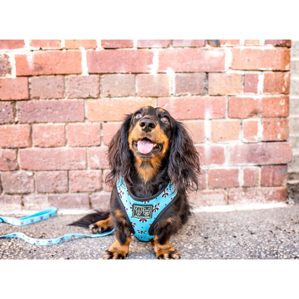 Adjustable Dog Harness for Big and Small Dogs The Raccoon Stars