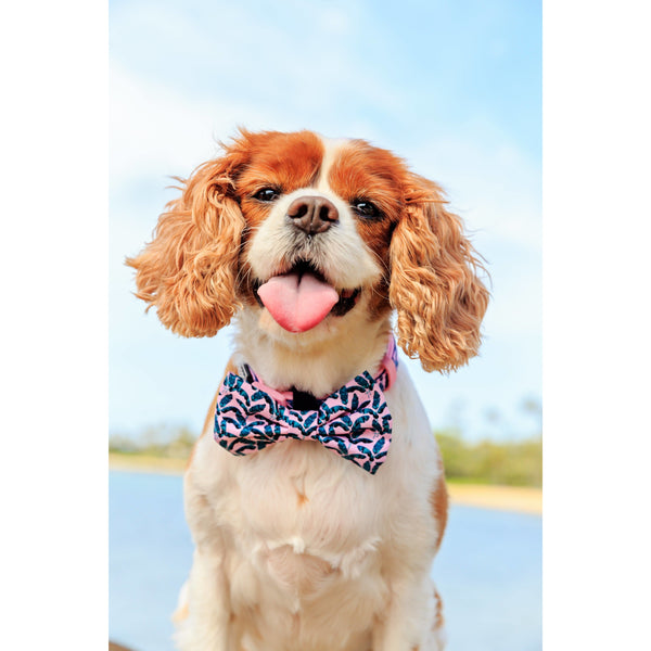 Dog Collar and Bowtie for Big and Small Dogs Tropical Paradise Palms