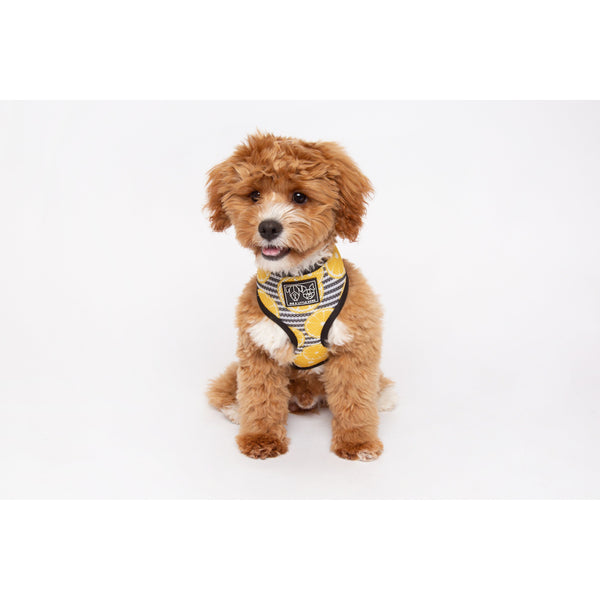 You're The Zest Lemon Classic Mesh Dog Harness