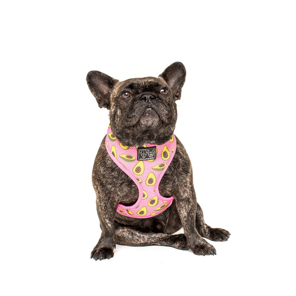 Zero Guacs Given Avocado Classic Mesh Dog Harness