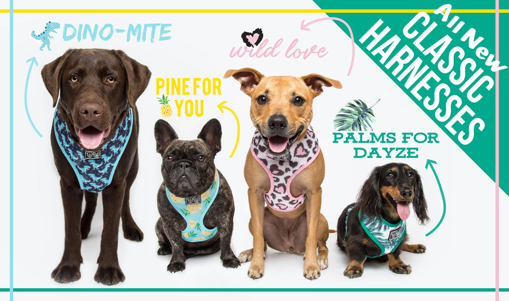 Big & Little Dogs | Adjustable Dog Harness Tropical Paradise