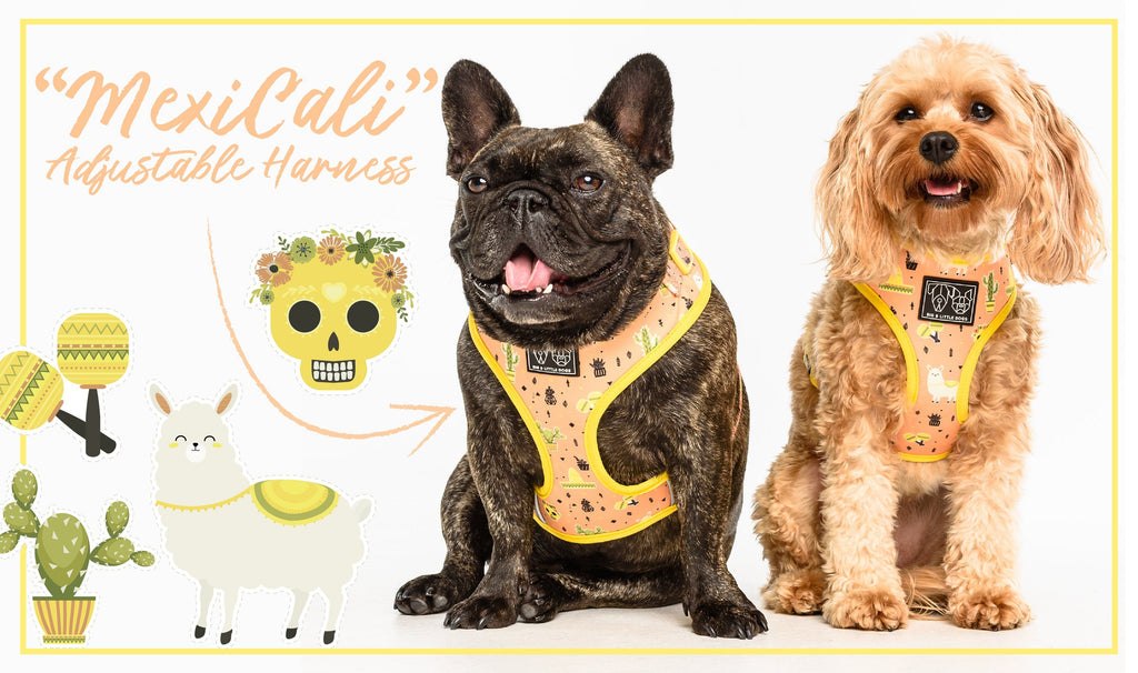 Big & Little Dogs | Reversible Dog Harness | Scandi Forest
