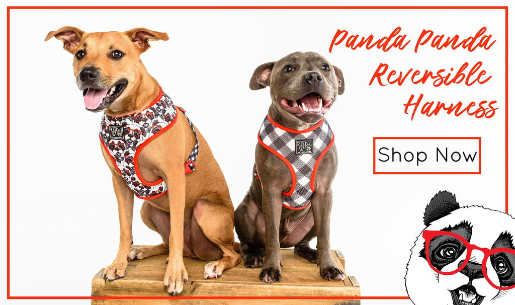 Big & Little Dogs | Collar & Bow Tie Polka Dots