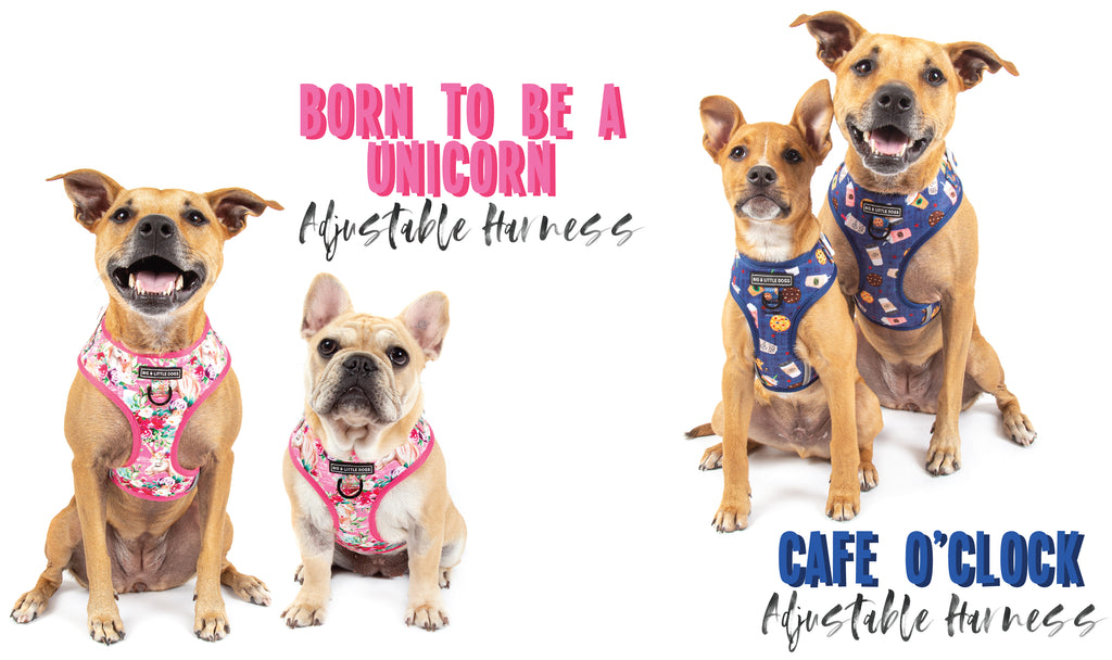 Big & Little Dogs | Reversible Dog Harness | Bug Me Anytime