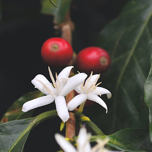 Speciality coffee - climate and seasonality.