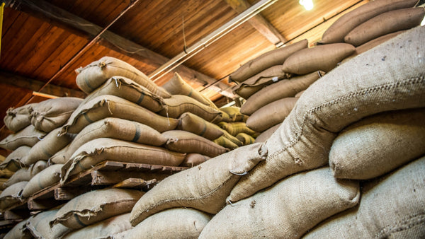 a large pile of coffee in sacks.