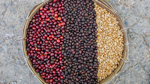 coffee bean processing from cherry to green coffee