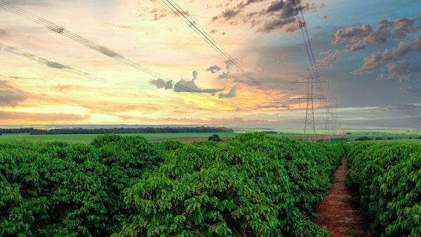 A large coffee farm in Brazil