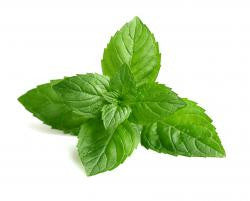 PEPPERMINT Essential oil, INDIAN