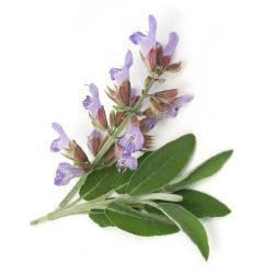 SAGE OIL,Essential oil
