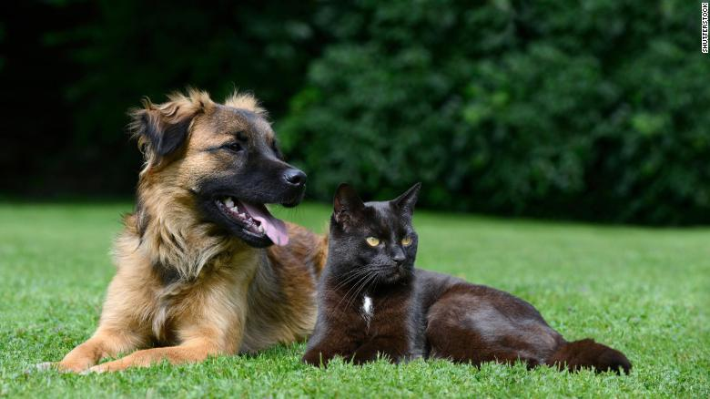 Intestinal Worms in Dogs and Cats: Symptoms, Treatment