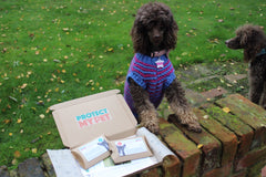 Essential dog health box
